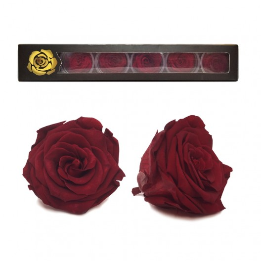Red Explorer Rose Heads Large - 6 per box