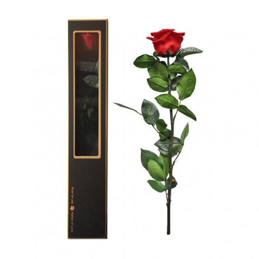 Single Preserved Rose In A Luxury Gift Box