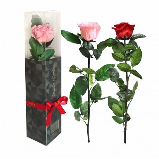 Single Ecuadorian Preserved Rose Stemmed